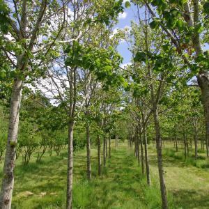 La pépinière départementale aux 10 000 arbres