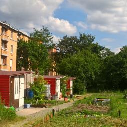 Des potagers dans la cité de Stains - Jardins ouverts