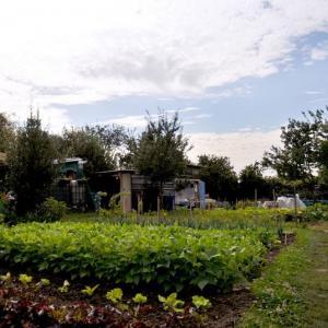 Croisière Agriculture urbaine + atelier Brunch