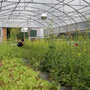 Permaculture avec le chef jardinier de Zone Sensible