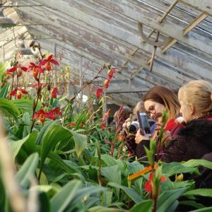 Les serres Vacherot et Lecoufle, pionniers de la culture d'orchidées