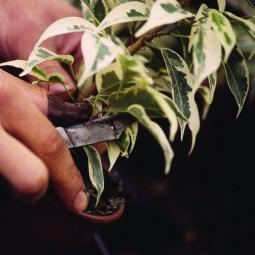 Dans un centre horticole et savoir-faire d'horticulteurs