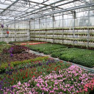 Visite d'un Centre horticole