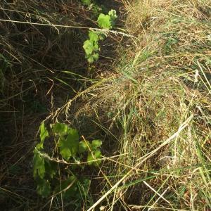 Atelier travail de la vigne et dégustation de vin naturel