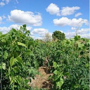 USUFRUIT, Projet d'implantation de vignes patrimoniales et expérimentales dans les anciens vergers de la plaine des vertus