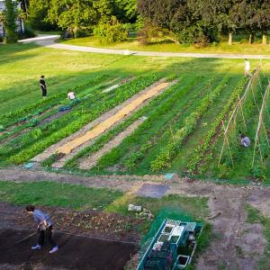 Cooperative, organic and sustainable : the micro farm in the Vincennes' woods