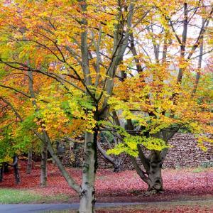 Tégéval - Balade forestière dans le bois de la Grange