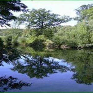 Randonnée dans la forêt de Bondy