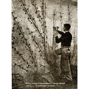 La longue histoire des murs à pêches avec la Société Régionale Horticole de Montreuil