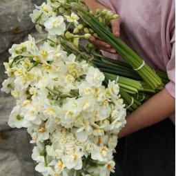 De la floriculture sur les hauts de Belleville