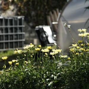 Une flore urbaine entre le cimetière et le réservoir de Belleville