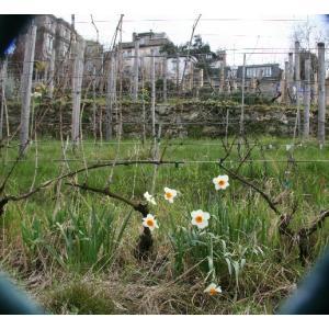 Balade patrimoniale dans les vignes de Montmartre