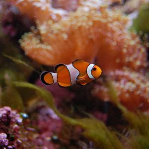 L'aquarium tropical du Palais de la Porte Dorée © KoS