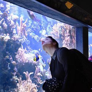 Les trésors de l'aquarium