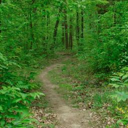 Tégéval - Jeu de piste en forêt