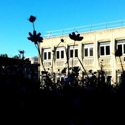 Une ferme urbaine dans un collège