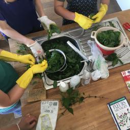 Balade et atelier cuisine autour des plantes sauvages à Romainville