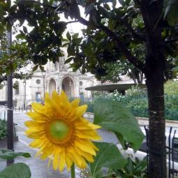 Walking tour about nature in La Goutte d'Or