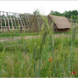 Expérimentation dans les champs néolithiques de l'archéosite de la Haute-Ile