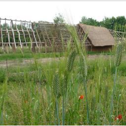 Dans les champs néolithiques de l'archéosite de la Haute-Ile