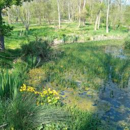 Fête de la nature : Balade-découverte dans le parc du Morbras