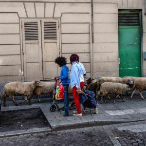 La Transhumance du Grand Paris de Vincennes à Maisons-Alfort
