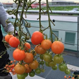 Balade sur les toits à la découverte d'une micro-ferme urbaine