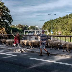 La Transhumance du Grand Paris de Rueil-Malmaison au Bois de Boulogne