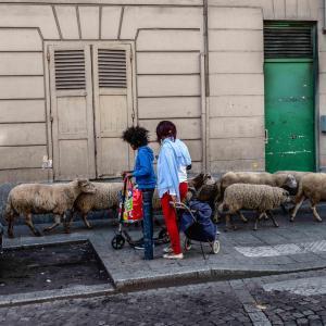 La Transhumance du Grand Paris du Bois de Boulogne aux voies sur berges