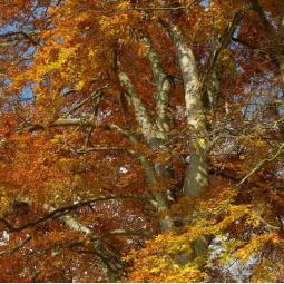 Reconnaître les arbres du Bois de Vincennes
