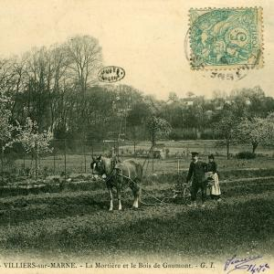 Des bords de Marne au Bois de Vincennes, la Belle Epoque en cartes postales