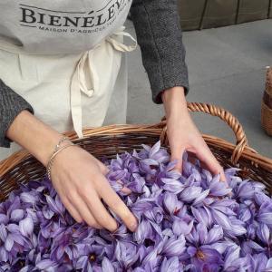 Atelier cueillette et émondage du safran sur les toits de Paris