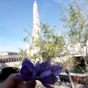Du safran sur les toits de Paris