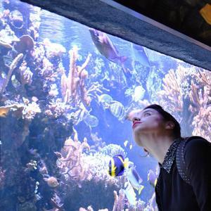 Visite de l'aquarium du Palais de la Porte Dorée