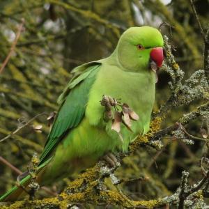 Observation des oiseaux et libellules au Parc des Aulnes à Fresnes