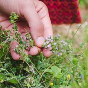 Balade nature autour des plantes médicinales et comestibles