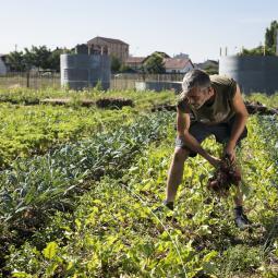 Initiation à la permaculture avec un chef jardinier de Zone Sensible