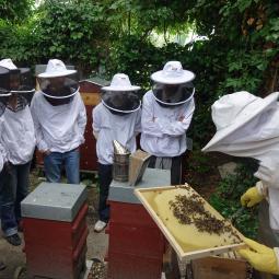 Initiation à l'apiculture avec un professionnel de Zone Sensible