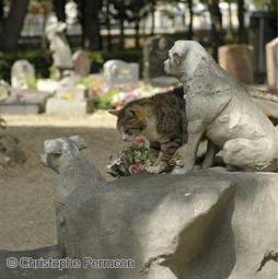 Histoire et anecdotes du Cimetière animalier d'Asnières - Visite virtuelle