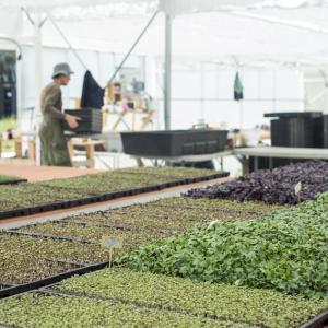 Cultivez et mangez local, bio et solidaire avec le paysan urbain Sequano ©William Gaye