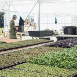 « Le Paysan urbain », an urban micro-farm in Romainville