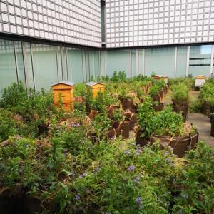 La plantation du safran à l'Institut du Monde Arabe - Visite virtuelle