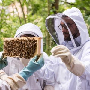 Initiation à l'apiculture urbaine dans le jardin du Palais de Tokyo