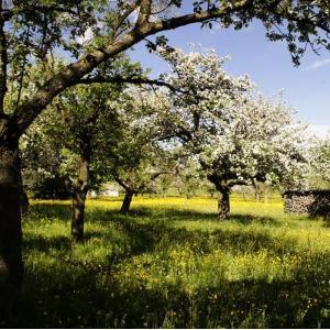 Tégéval -La taille des arbres au verger du Mont-Ezard