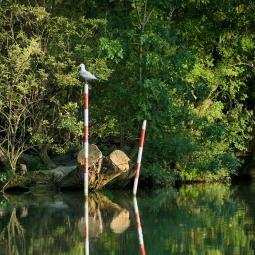 Balade nature sur les îles de la Marne