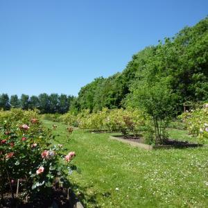 Histoire de lilas et autres plantes au parc de Vitry