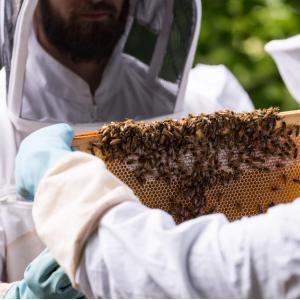Initiation à l'apiculture urbaine dans les Hauts-de-Seine