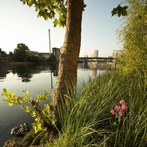 Balade contée : l'eau et l'imaginaire au confluent Marne/Seine