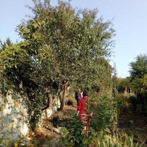 Marche en pleine conscience et méditation aux Murs à pêches de Montreuil