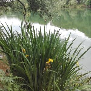 Balade nature au fil de la Marne